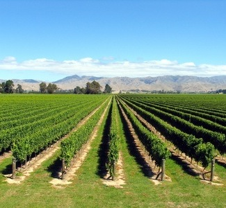 New Zealand Wine Tourism