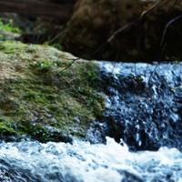 Ecotourism and sustainability